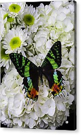 Exotic Green Butterfly Acrylic Print