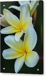 Acrylic Print featuring the photograph Exotic by Julie Andel