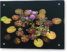 Exotic Lilies Acrylic Print by Kurt Shaffer