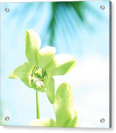 Exotic Orchid Beauty Acrylic Print by Georgia Fowler