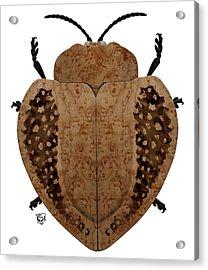 Exotic Wood Tortoise Beetle Acrylic Print by Stephen Kinsey