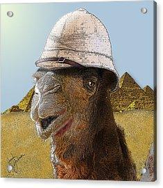 Expeditionary Camel At Giza Acrylic Print