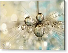 Acrylic Print featuring the photograph Exploding Dandy Drops by Sharon Johnstone