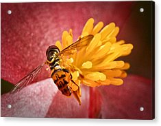 Exploring A Flower Acrylic Print by Ryan Kelly