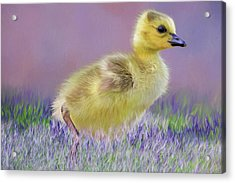Exploring Spring Acrylic Print