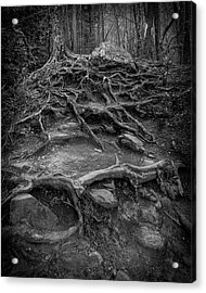 Acrylic Print featuring the photograph Exposed Roots by Alan Raasch