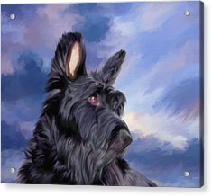 Expression Is Everything Scottish Terrier Dog Acrylic Print