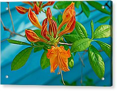 Acrylic Print featuring the photograph Expressionalism Budding Azalea by Aimee L Maher Photography and Art Visit ALMGallerydotcom