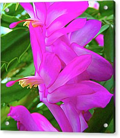 Acrylic Print featuring the photograph Expressionalism Christmas Cactus Flower by Aimee L Maher Photography and Art Visit ALMGallerydotcom