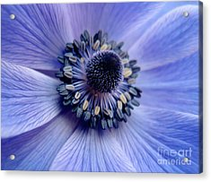 Expressive Blue And Purple Floral Macro Photo 706 Acrylic Print