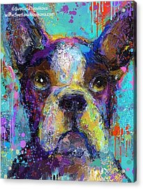 Expressive Boston Terrier Painting By Acrylic Print
