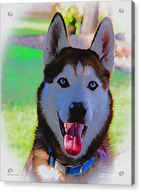 Acrylic Print featuring the digital art Expressive Siberian Husky  A62117d by Mas Art Studio