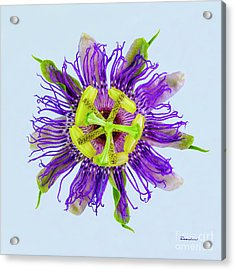Expressive Yellow Green And Violet Passion Flower 50674b Acrylic Print