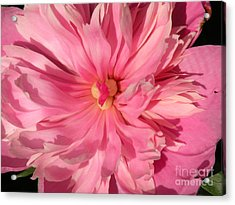Exquisite Acrylic Print by Christine Belt