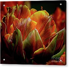 Extraordinary Passion Acrylic Print