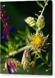 Eye Candy From The Garden Acrylic Print