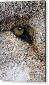 Eye Catcher Acrylic Print