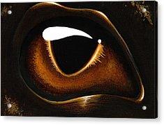 Eye Of Baby Bronze Acrylic Print by Elaina  Wagner