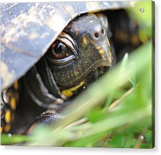 Eye Of The Beholder Acrylic Print by Joan Kerns