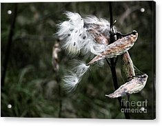 Eye Of The Beholder Acrylic Print