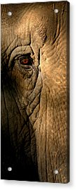 Eye Of The Elephant Acrylic Print