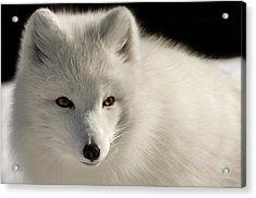 Eye Of The Fox Acrylic Print