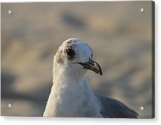 Eye Of The Gull Acrylic Print
