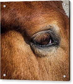 Eye Of The Horse Acrylic Print by Paul Freidlund