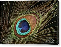 Eye Of The Peacock #11 Acrylic Print