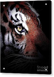 Eye Of The Tiger 2 Acrylic Print by Animals Art