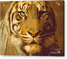 Eye Of The Tiger Animal Portrait  Acrylic Print