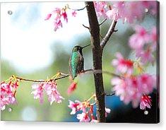 Eye On Spring Acrylic Print by Lynn Bauer