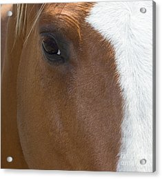 Eye On You Horse Acrylic Print