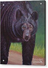 Eye To Eye - Black Bear Acrylic Print by Danielle Smith