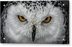 Eye-to-eye Acrylic Print by Brad Allen Fine Art