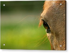 Eye Whiskers Acrylic Print by Angela Rath