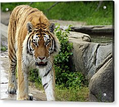 Eyeing Me Up Acrylic Print by Gordon Dean II