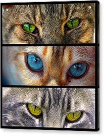 Eyes 1 Acrylic Print