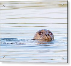 Acrylic Print featuring the photograph Eyes Of Doubt by Debbie Stahre