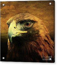 Eyes Of The Golden Hawk . Square Acrylic Print by Wingsdomain Art and Photography