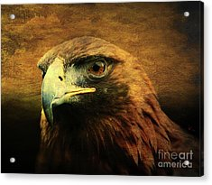 Eyes Of The Golden Hawk Acrylic Print by Wingsdomain Art and Photography