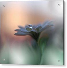 Eyes Of The Light Acrylic Print