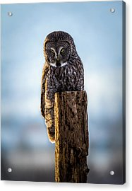 Eyes Of The Preditor Acrylic Print by TL Mair