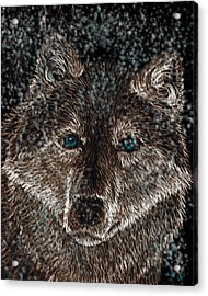 Eyes Of The Snow Wolf Acrylic Print by Nick Gustafson
