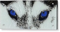 Eyes Of The Wild Acrylic Print