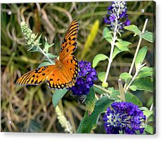 Acrylic Print featuring the photograph Eyes On A Butterfly by Sue Melvin