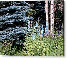 Eyes On Blue Acrylic Print by Jenna Cornell