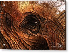 Eyes Through The Canyon Of Time Acrylic Print by Wingsdomain Art and Photography