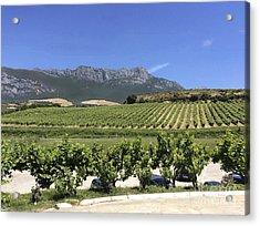 F 41 Ugarte Vineyards Rioja Acrylic Print by Norberto Torriente