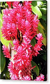 F10 Red Ginger Acrylic Print by Donald k Hall